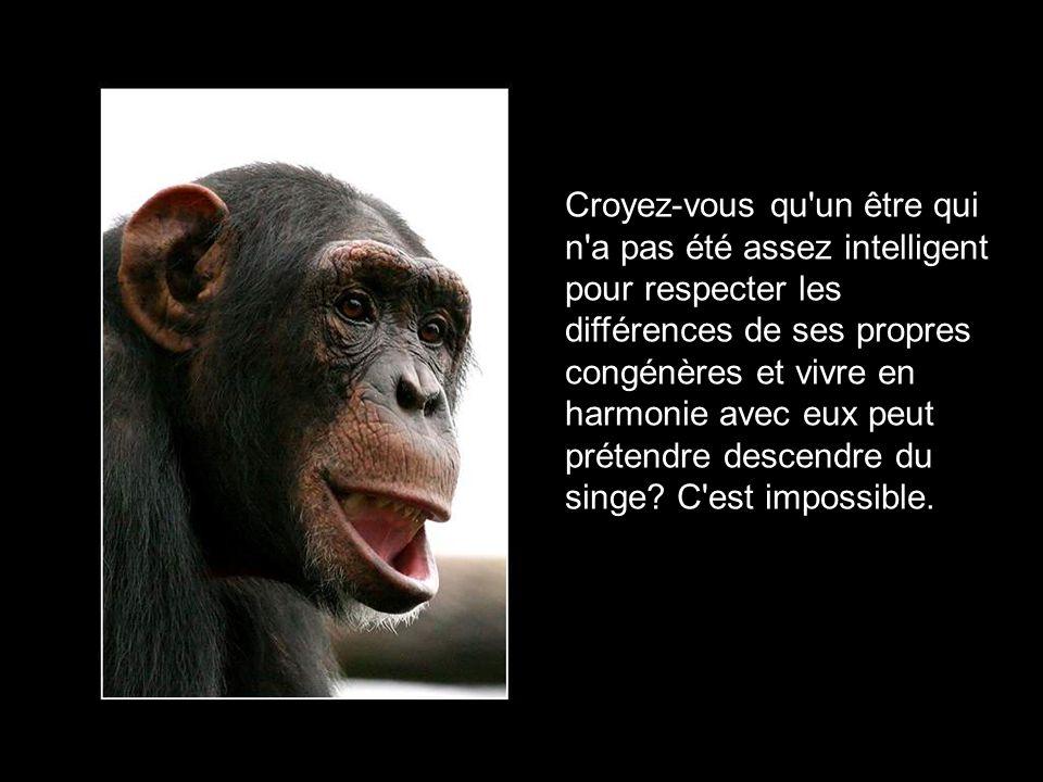 L'homme, descendant du singe? C'est drôle à en mourir de rire! Avons-nous déjà vu des singes se bourrer la panse au point de crever d'obésité et se sa