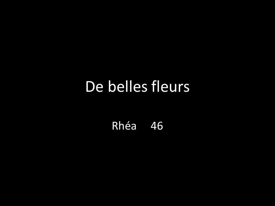 De belles fleurs Rhéa 46