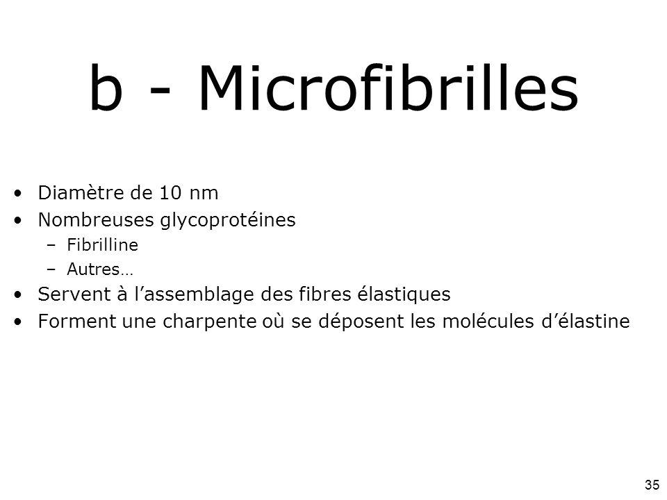 35 b - Microfibrilles Diamètre de 10 nm Nombreuses glycoprotéines –Fibrilline –Autres… Servent à lassemblage des fibres élastiques Forment une charpen