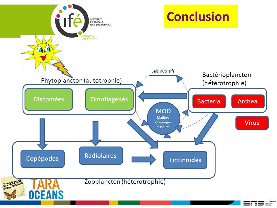 Conclusion MOD Matière organique dissoute DiatoméesDinoflagellés Virus BacteriaArchea Copépodes Tintinnides Radiolaires Phytoplancton (autotrophie) Ba