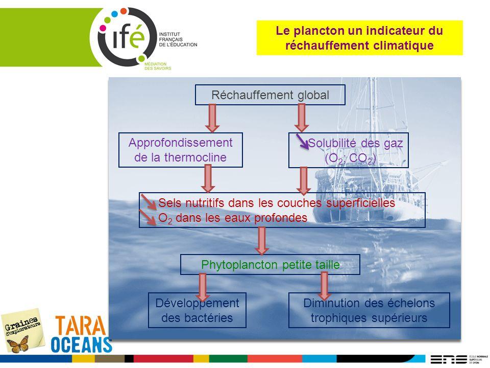 Réchauffement global Approfondissement de la thermocline Solubilité des gaz (O 2 ; CO 2 ) Sels nutritifs dans les couches superficielles O 2 dans les