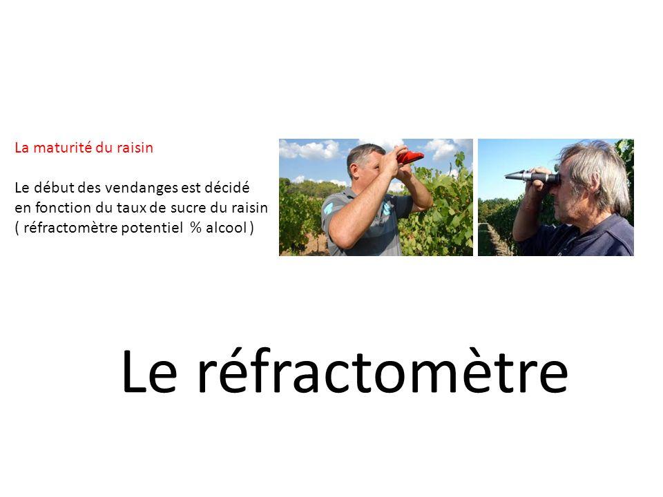 La maturité du raisin Le début des vendanges est décidé en fonction du taux de sucre du raisin ( réfractomètre potentiel % alcool ) Le réfractomètre
