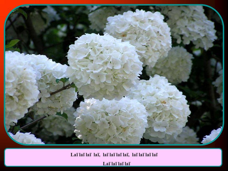 Jai ceuilli des fleurs et jai sifflé tant que jai pu. Jai attendu, attendu, elle nest jamais venue.