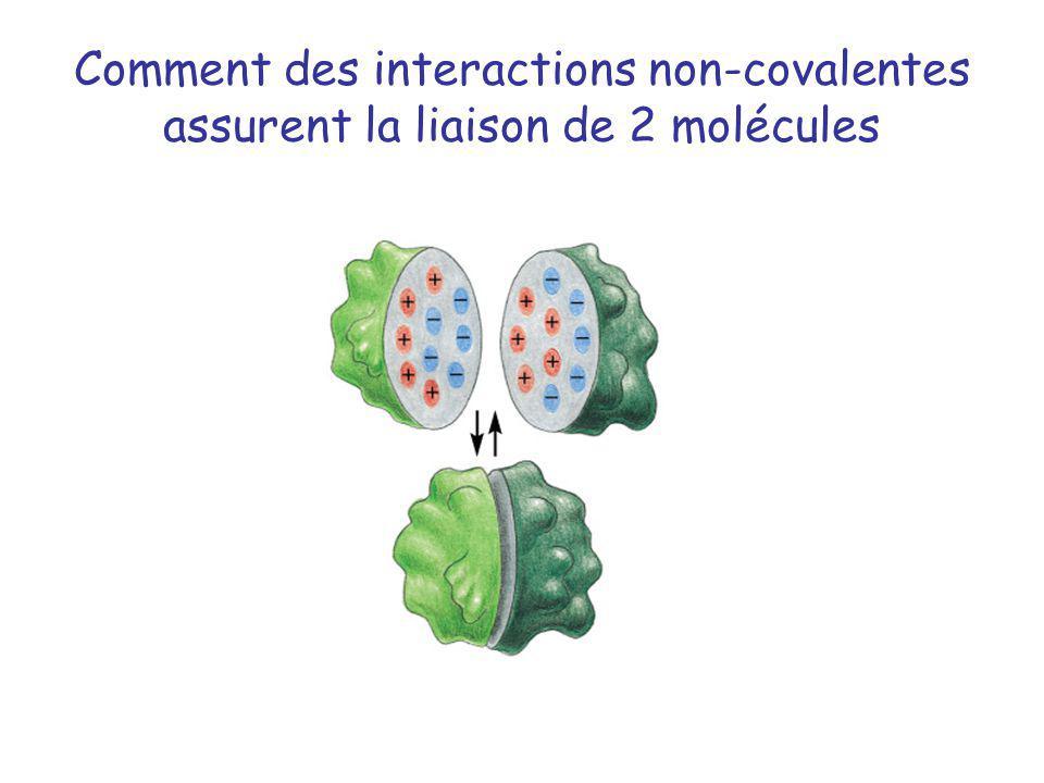 Comment des interactions non-covalentes assurent la liaison de 2 molécules