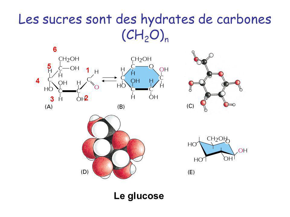 Les sucres sont des hydrates de carbones (CH 2 O) n Le glucose 1 2 3 4 5 6