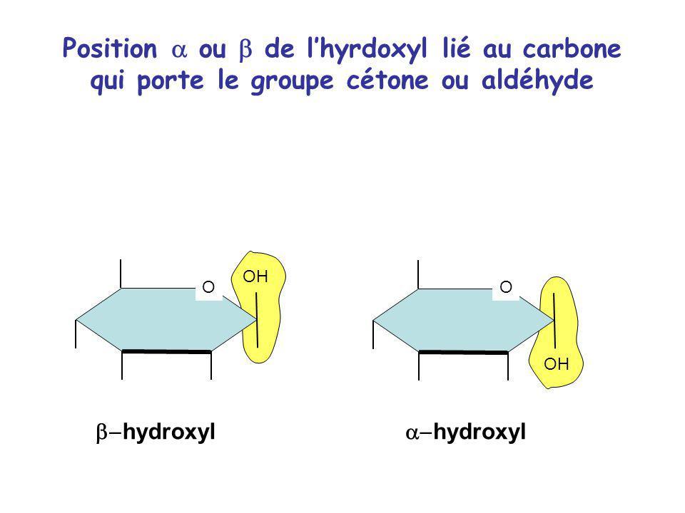 Position ou de lhyrdoxyl lié au carbone qui porte le groupe cétone ou aldéhyde OH O O hydroxyl