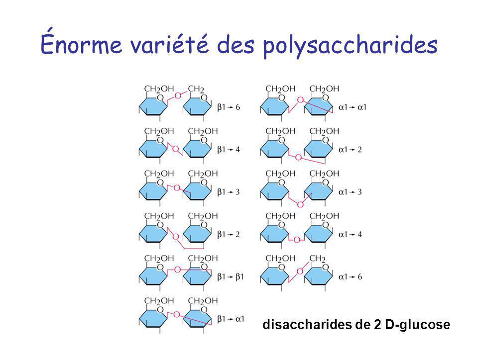 Énorme variété des polysaccharides disaccharides de 2 D-glucose