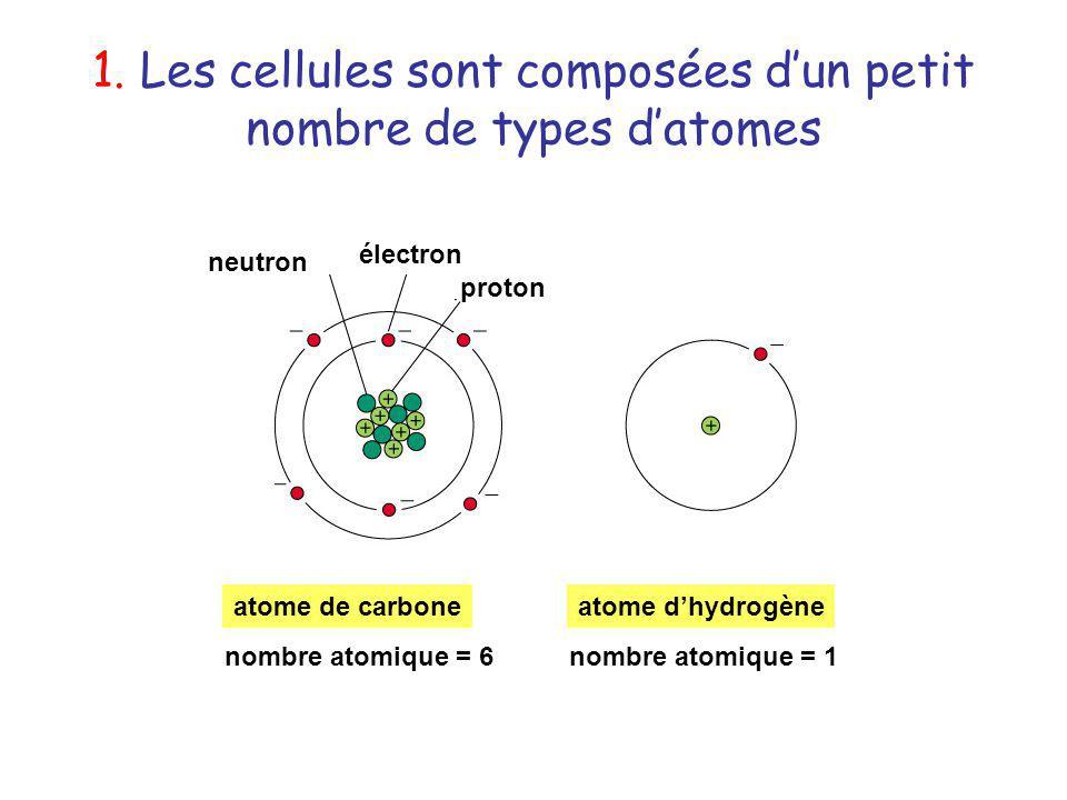 1. Les cellules sont composées dun petit nombre de types datomes neutron électron proton atome de carboneatome dhydrogène nombre atomique = 1nombre at