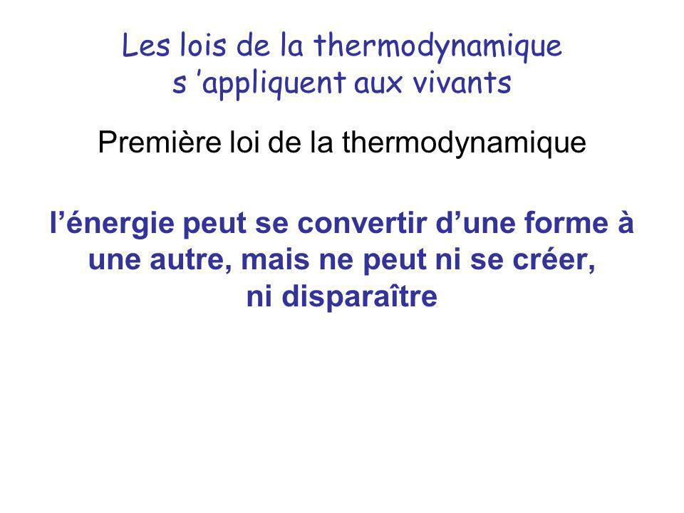 Les lois de la thermodynamique s appliquent aux vivants Première loi de la thermodynamique lénergie peut se convertir dune forme à une autre, mais ne