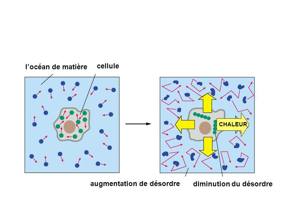 locéan de matière cellule augmentation de désordre diminution du désordre CHALEUR