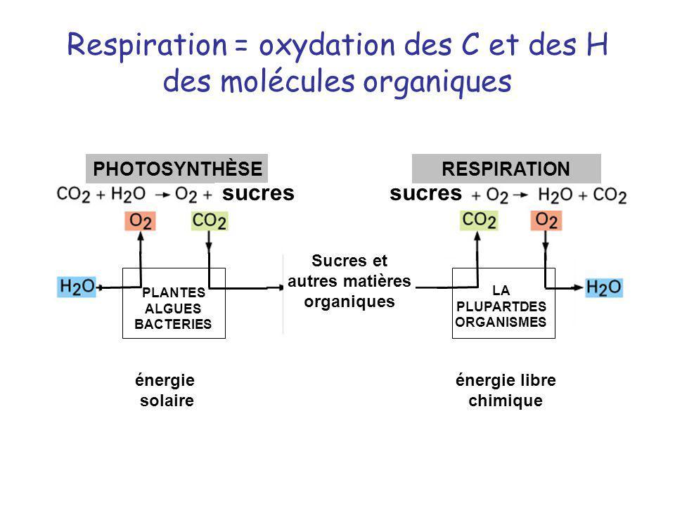 Respiration = oxydation des C et des H des molécules organiques PHOTOSYNTHÈSERESPIRATION PLANTES ALGUES BACTERIES LA PLUPARTDES ORGANISMES énergie sol