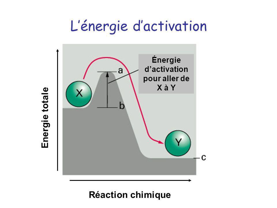 Lénergie dactivation Énergie dactivation pour aller de X à Y Réaction chimique Energie totale