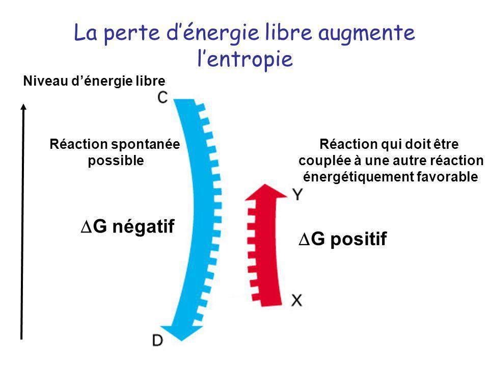 La perte dénergie libre augmente lentropie G négatif G positif Réaction spontanée possible Réaction qui doit être couplée à une autre réaction énergét