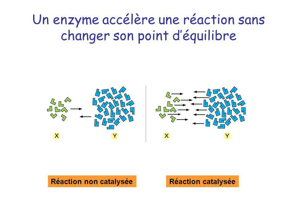 Un enzyme accélère une réaction sans changer son point déquilibre Réaction non catalyséeRéaction catalysée