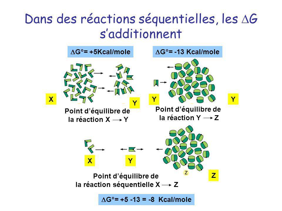 Dans des réactions séquentielles, les G sadditionnent Point déquilibre de la réaction Y Z Point déquilibre de la réaction X Y X Y Z X Y Point déquilib