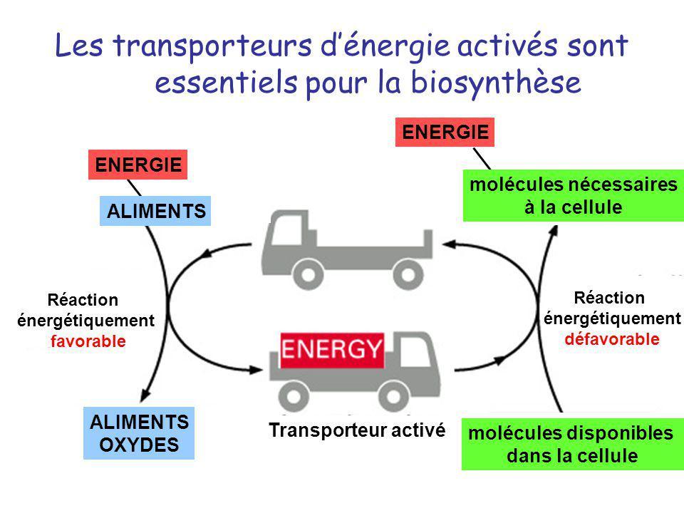 Les transporteurs dénergie activés sont essentiels pour la biosynthèse ANABOLISMECATABOLISME ENERGIE ALIMENTS molécules disponibles dans la cellule mo