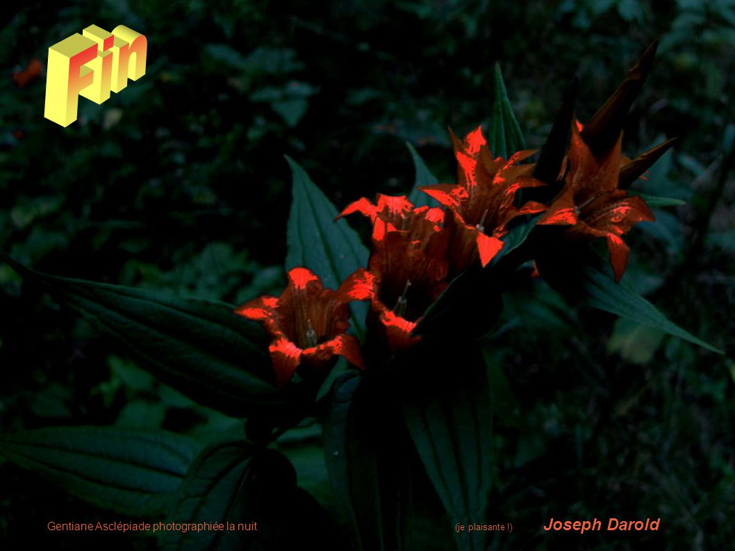 Gentiane Asclépiade photographiée la nuit (je plaisante !) Joseph Darold