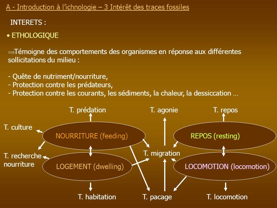 INTERETS : ETHOLOGIQUE Témoigne des comportements des organismes en réponse aux différentes sollicitations du milieu : - Quête de nutriment/nourriture