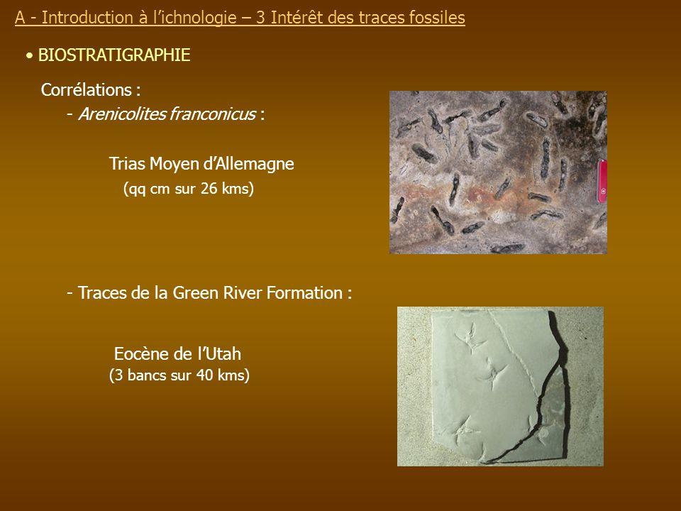 BIOSTRATIGRAPHIE Corrélations : - Arenicolites franconicus : Trias Moyen dAllemagne (qq cm sur 26 kms) - Traces de la Green River Formation : Eocène d