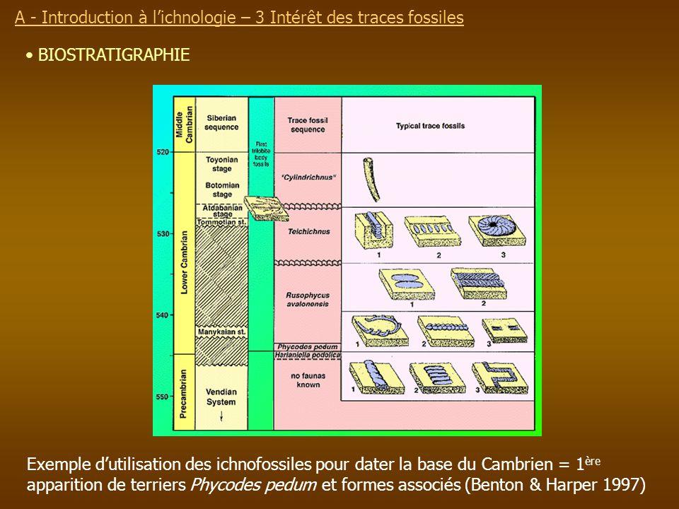 Exemple dutilisation des ichnofossiles pour dater la base du Cambrien = 1 ère apparition de terriers Phycodes pedum et formes associés (Benton & Harpe