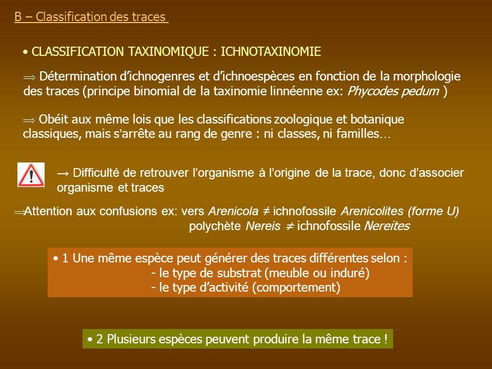 B – Classification des traces CLASSIFICATION TAXINOMIQUE : ICHNOTAXINOMIE Détermination dichnogenres et dichnoespèces en fonction de la morphologie de