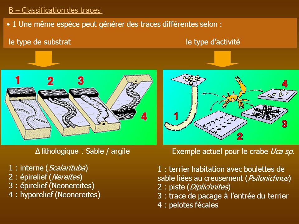 B – Classification des traces 1 Une même espèce peut générer des traces différentes selon : le type de substrat le type dactivité Exemple actuel pour