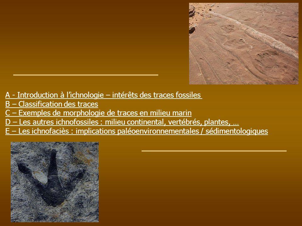 A - Introduction à lichnologie – intérêts des traces fossiles B – Classification des traces C – Exemples de morphologie de traces en milieu marin D –