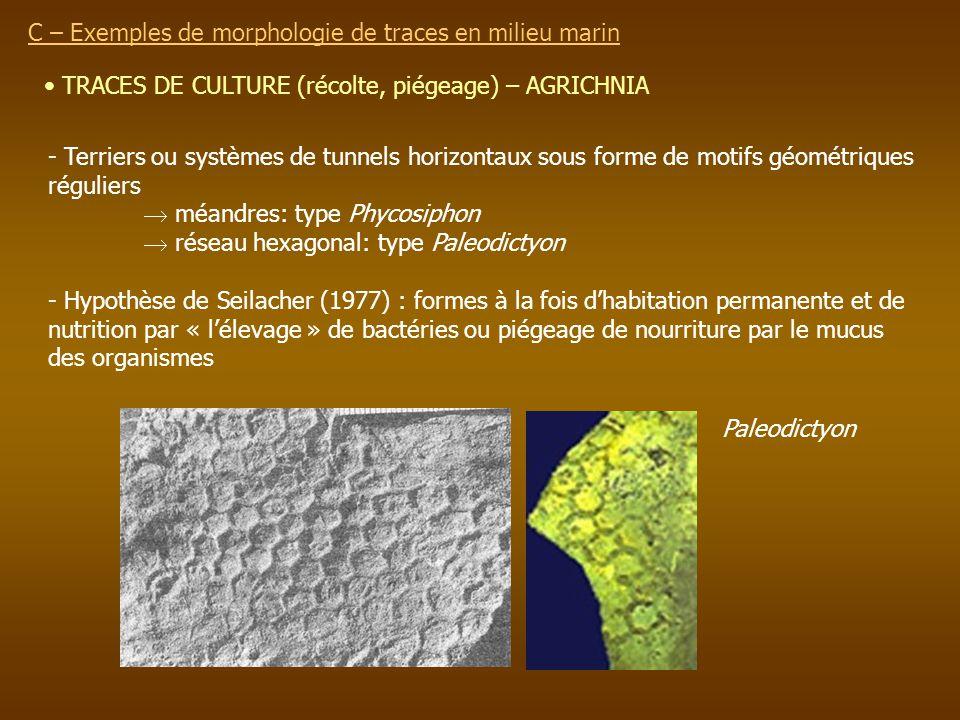 TRACES DE CULTURE (récolte, piégeage) – AGRICHNIA C – Exemples de morphologie de traces en milieu marin - Terriers ou systèmes de tunnels horizontaux