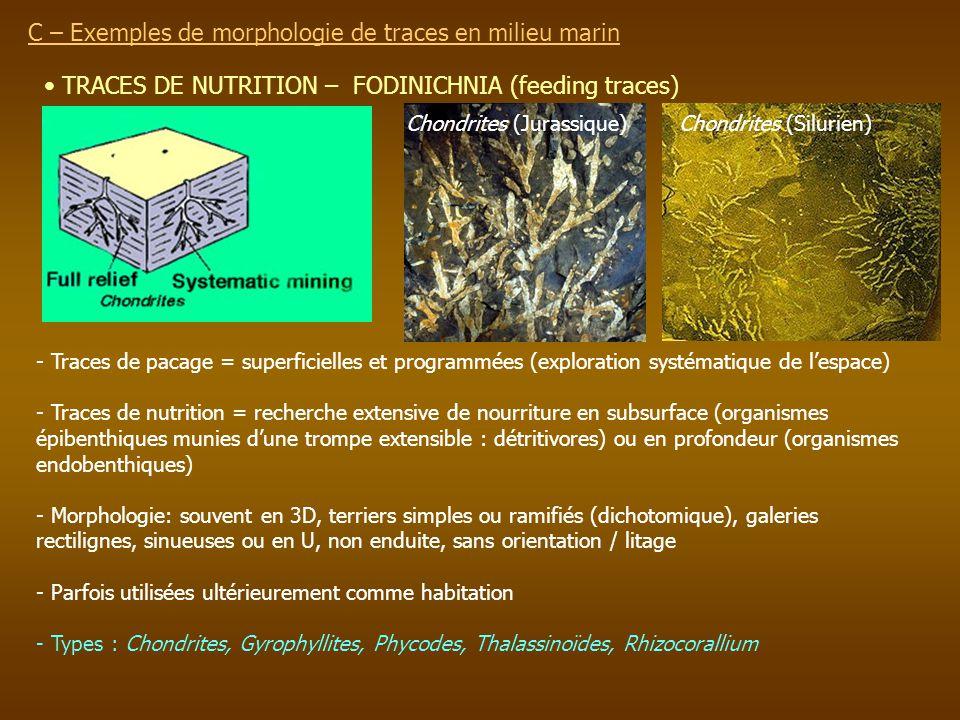 TRACES DE NUTRITION – FODINICHNIA (feeding traces) C – Exemples de morphologie de traces en milieu marin - Traces de pacage = superficielles et progra