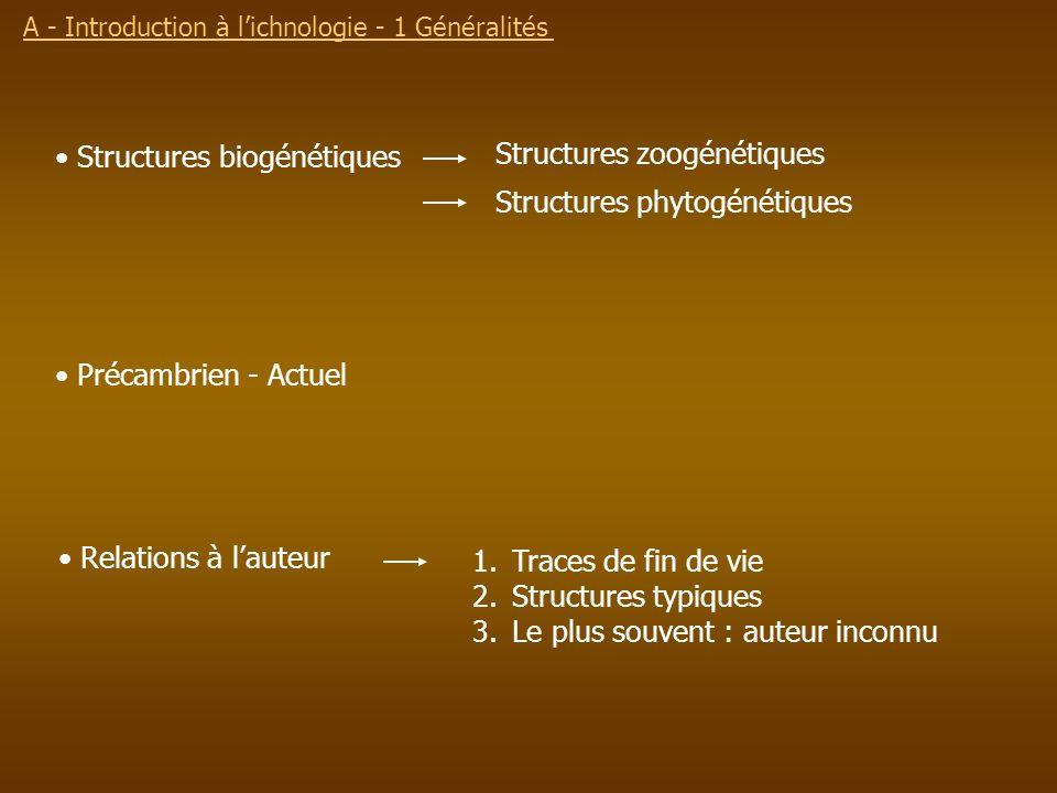 A - Introduction à lichnologie - 1 Généralités Structures biogénétiques Structures zoogénétiques Structures phytogénétiques 1.Traces de fin de vie 2.S