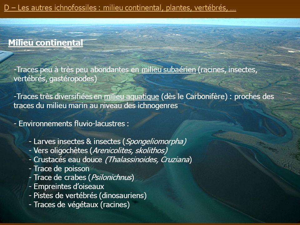D – Les autres ichnofossiles : milieu continental, plantes, vertébrés, … Milieu continental -Traces peu à très peu abondantes en milieu subaérien (rac