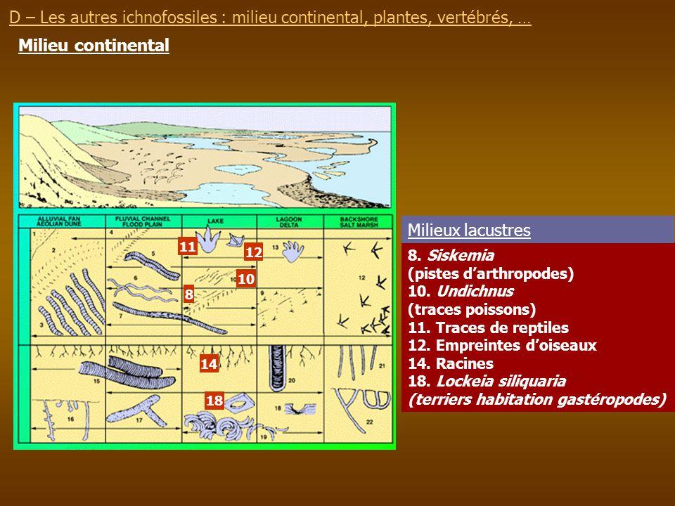 Milieu continental 8. Siskemia (pistes darthropodes) 10. Undichnus (traces poissons) 11. Traces de reptiles 12. Empreintes doiseaux 14. Racines 18. Lo