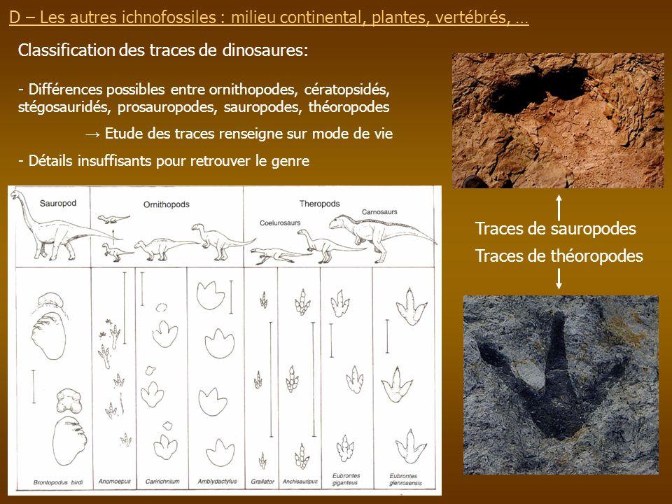 D – Les autres ichnofossiles : milieu continental, plantes, vertébrés, … Traces de sauropodes Traces de théoropodes Classification des traces de dinos