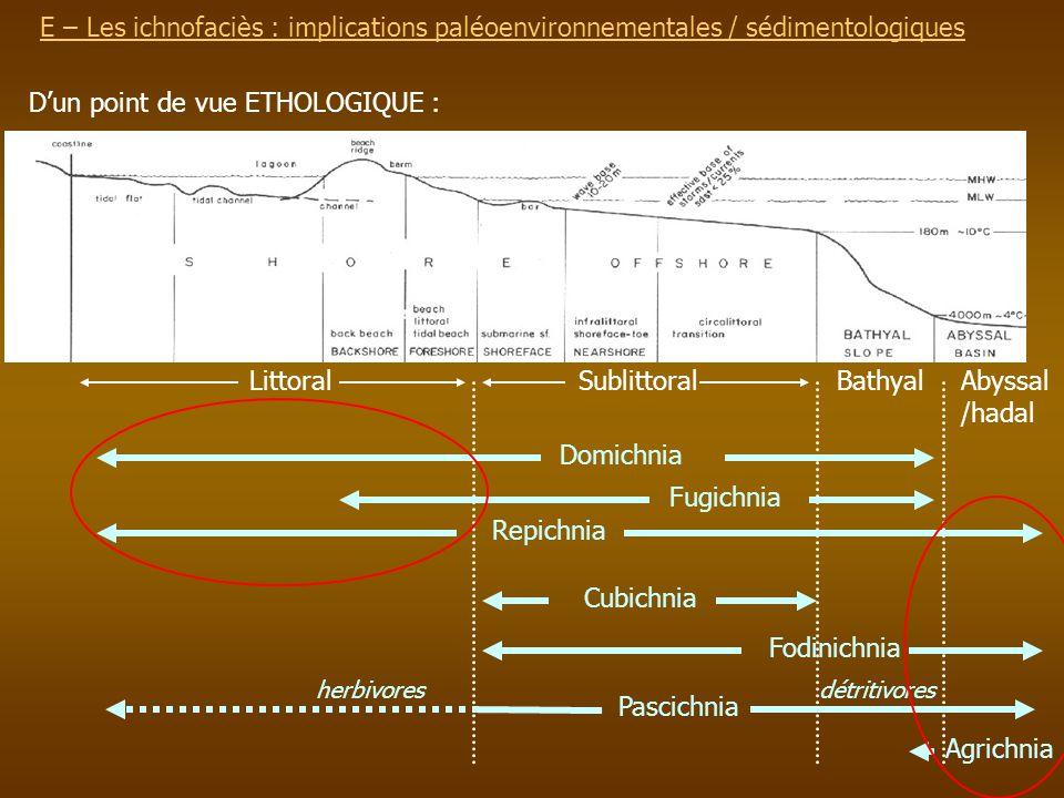 E – Les ichnofaciès : implications paléoenvironnementalesE – Les ichnofaciès : implications paléoenvironnementales / sédimentologiques Dun point de vu
