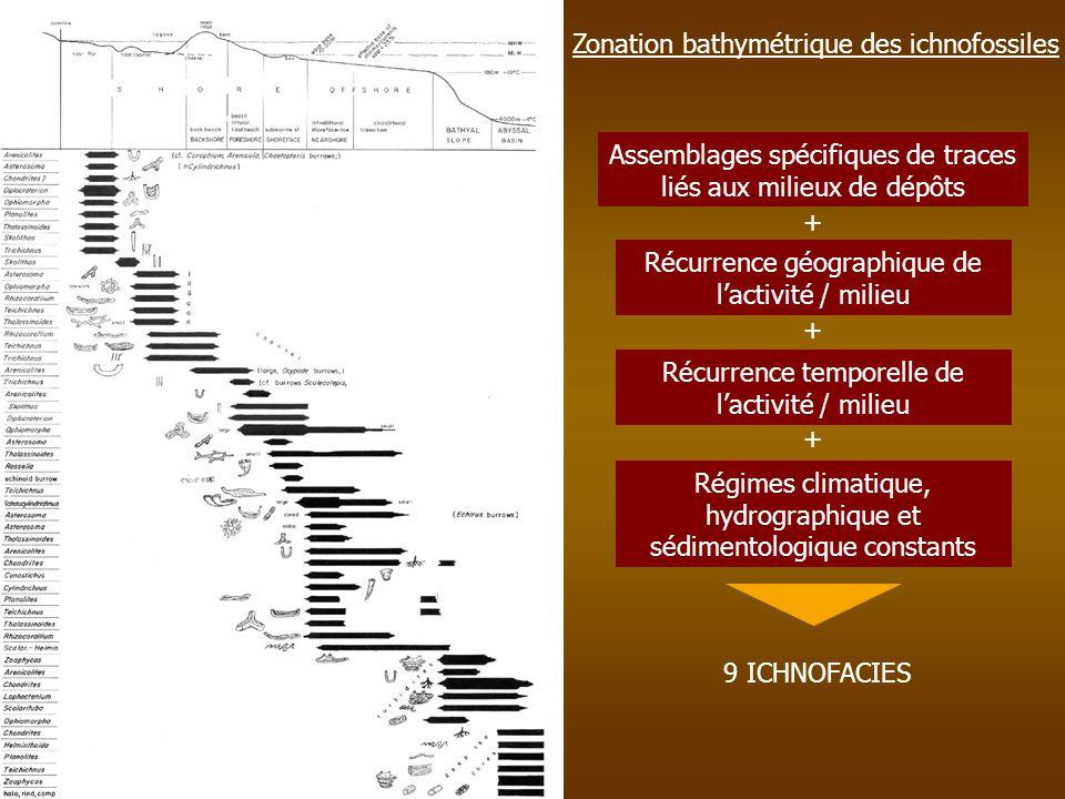 Zonation bathymétrique des ichnofossiles Assemblages spécifiques de traces liés aux milieux de dépôts Récurrence géographique de lactivité / milieu Ré