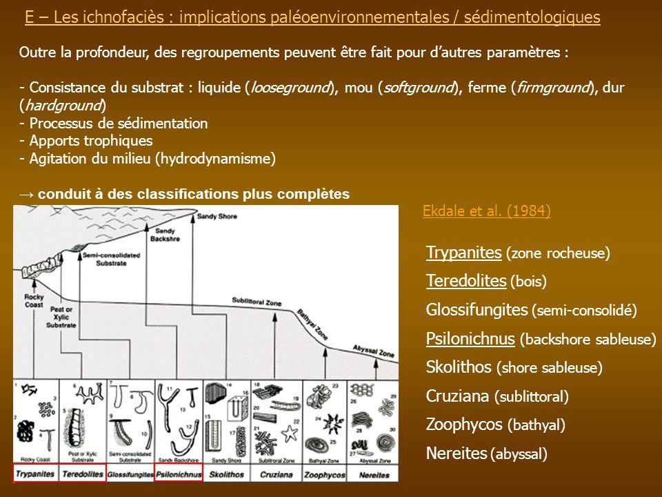 E – Les ichnofaciès : implications paléoenvironnementalesE – Les ichnofaciès : implications paléoenvironnementales / sédimentologiques Outre la profon