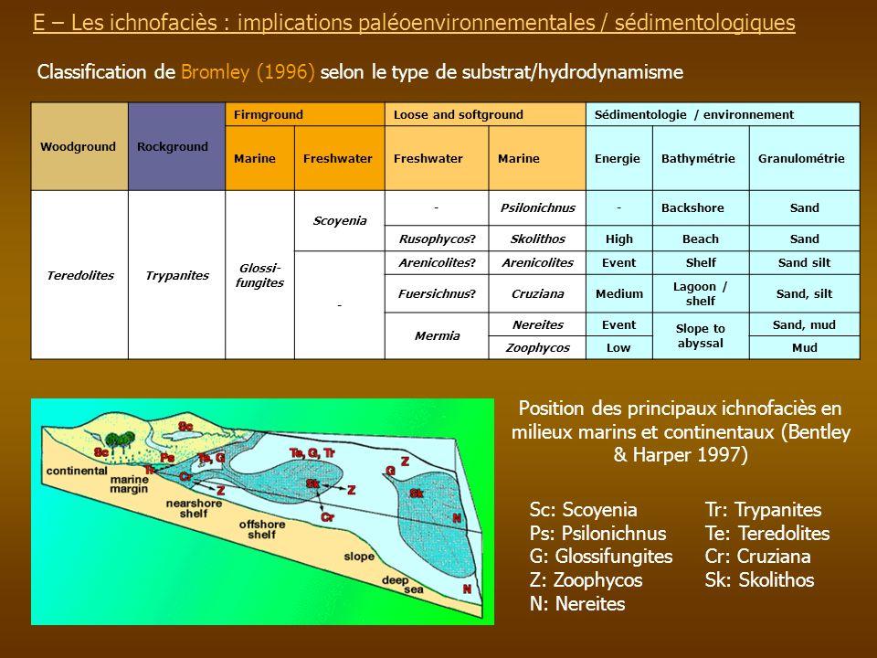 E – Les ichnofaciès : implications paléoenvironnementalesE – Les ichnofaciès : implications paléoenvironnementales / sédimentologiques WoodgroundRockg