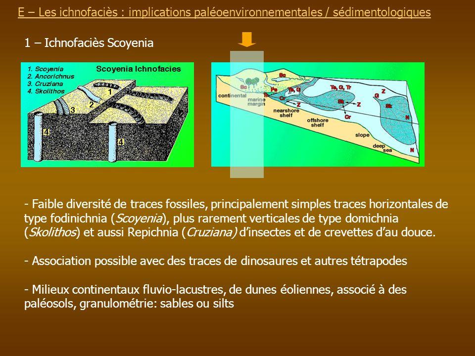 E – Les ichnofaciès : implications paléoenvironnementalesE – Les ichnofaciès : implications paléoenvironnementales / sédimentologiques 1 – Ichnofaciès
