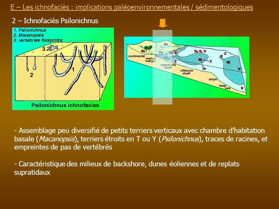E – Les ichnofaciès : implications paléoenvironnementalesE – Les ichnofaciès : implications paléoenvironnementales / sédimentologiques 2 – Ichnofaciès