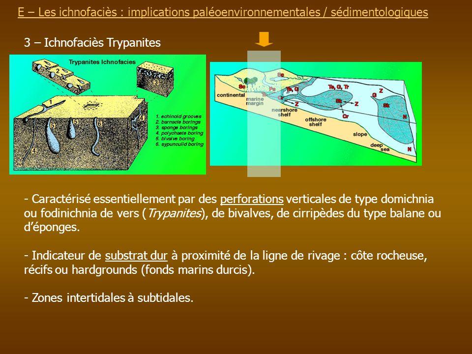 E – Les ichnofaciès : implications paléoenvironnementalesE – Les ichnofaciès : implications paléoenvironnementales / sédimentologiques 3 – Ichnofaciès