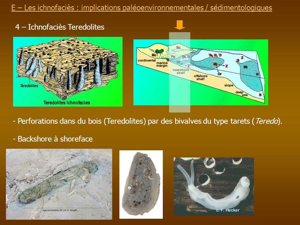 E – Les ichnofaciès : implications paléoenvironnementalesE – Les ichnofaciès : implications paléoenvironnementales / sédimentologiques 4 – Ichnofaciès