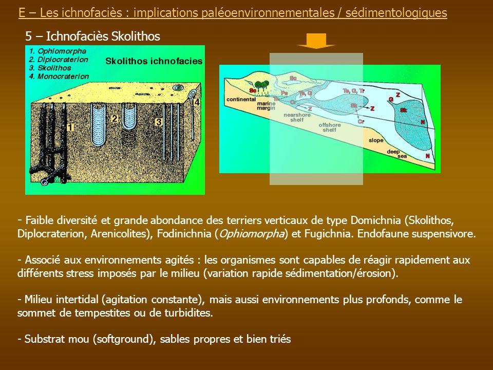 E – Les ichnofaciès : implications paléoenvironnementalesE – Les ichnofaciès : implications paléoenvironnementales / sédimentologiques 5 – Ichnofaciès