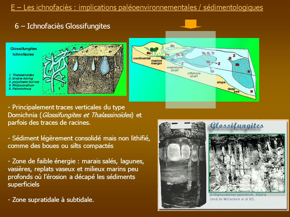 E – Les ichnofaciès : implications paléoenvironnementalesE – Les ichnofaciès : implications paléoenvironnementales / sédimentologiques 6 – Ichnofaciès