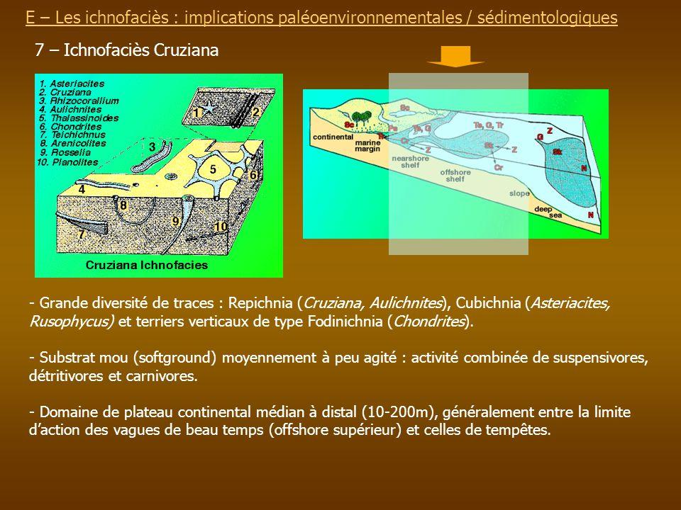 E – Les ichnofaciès : implications paléoenvironnementalesE – Les ichnofaciès : implications paléoenvironnementales / sédimentologiques 7 – Ichnofaciès