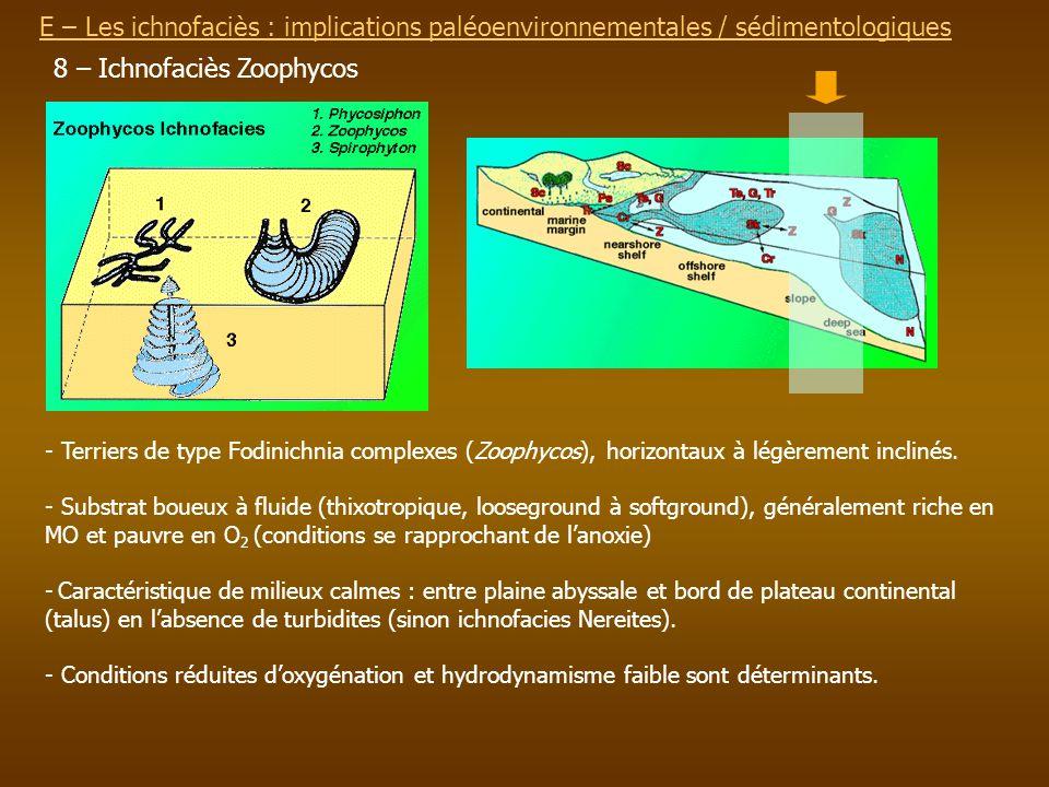 E – Les ichnofaciès : implications paléoenvironnementalesE – Les ichnofaciès : implications paléoenvironnementales / sédimentologiques 8 – Ichnofaciès
