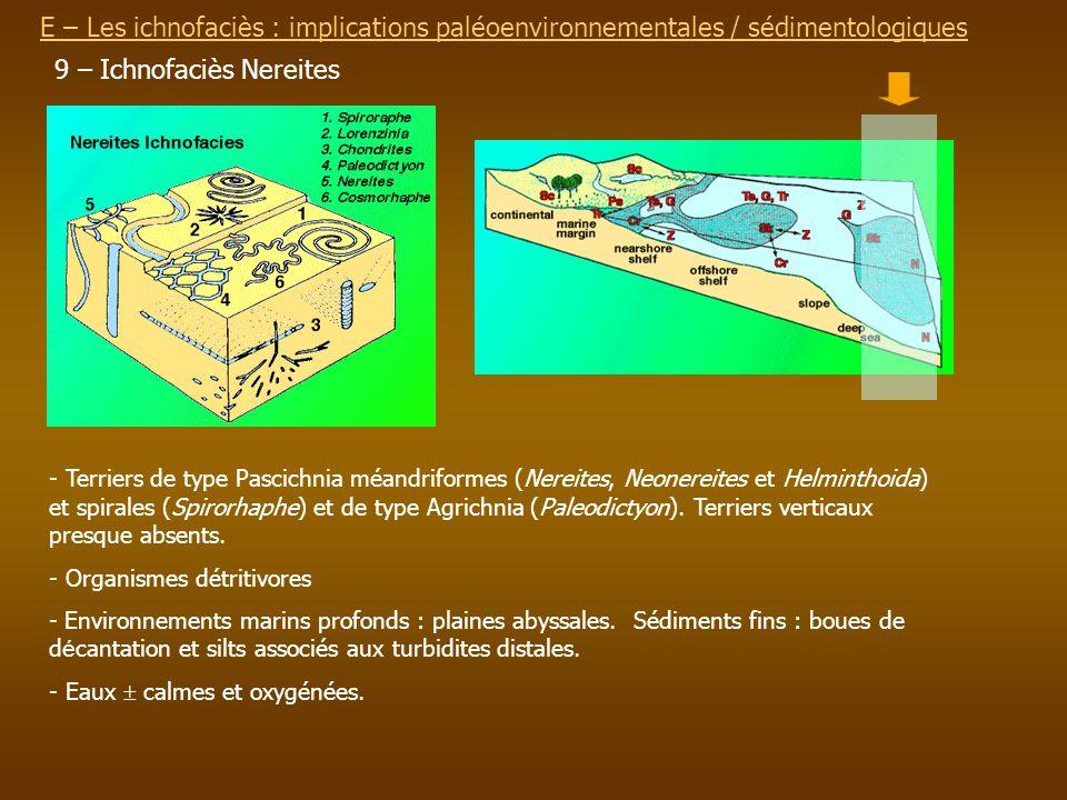 E – Les ichnofaciès : implications paléoenvironnementalesE – Les ichnofaciès : implications paléoenvironnementales / sédimentologiques 9 – Ichnofaciès