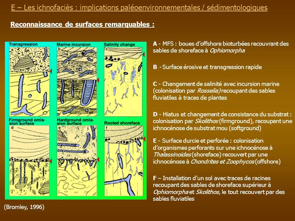 E – Les ichnofaciès : implications paléoenvironnementalesE – Les ichnofaciès : implications paléoenvironnementales / sédimentologiques Reconnaissance