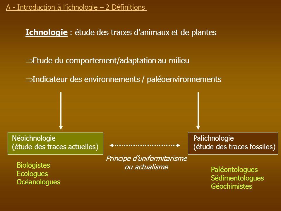 Ichnologie : étude des traces danimaux et de plantes Etude du comportement/adaptation au milieu Indicateur des environnements / paléoenvironnements Né