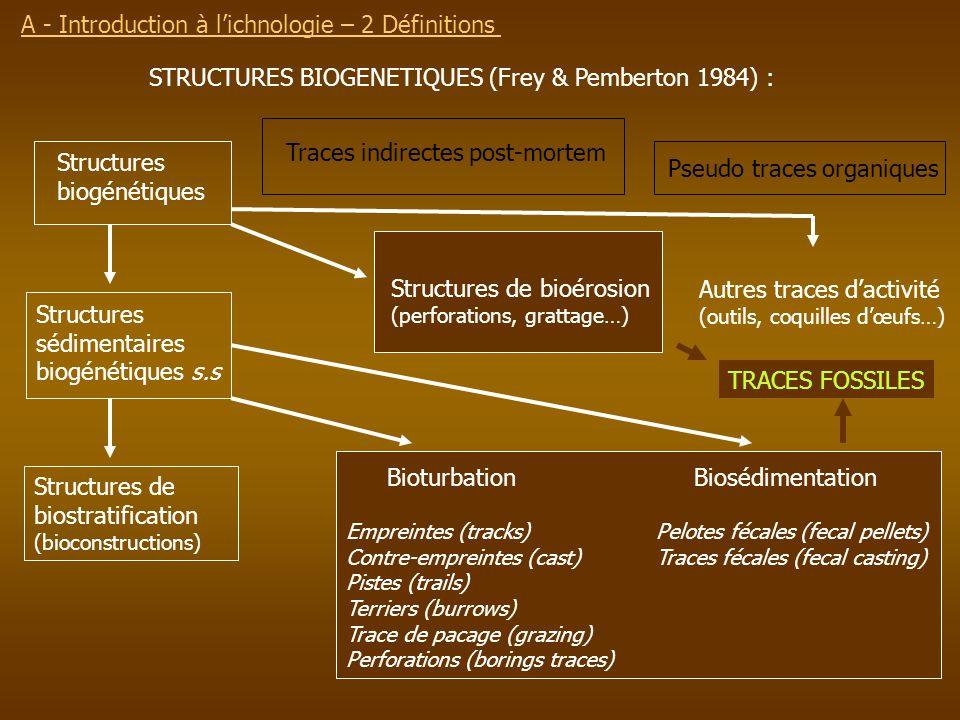 STRUCTURES BIOGENETIQUES (Frey & Pemberton 1984) : Structures biogénétiques Structures sédimentaires biogénétiques s.s Traces indirectes post-mortem P