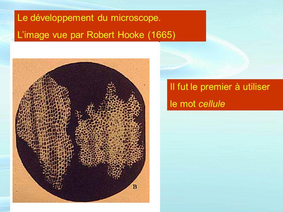 Le développement du microscope.